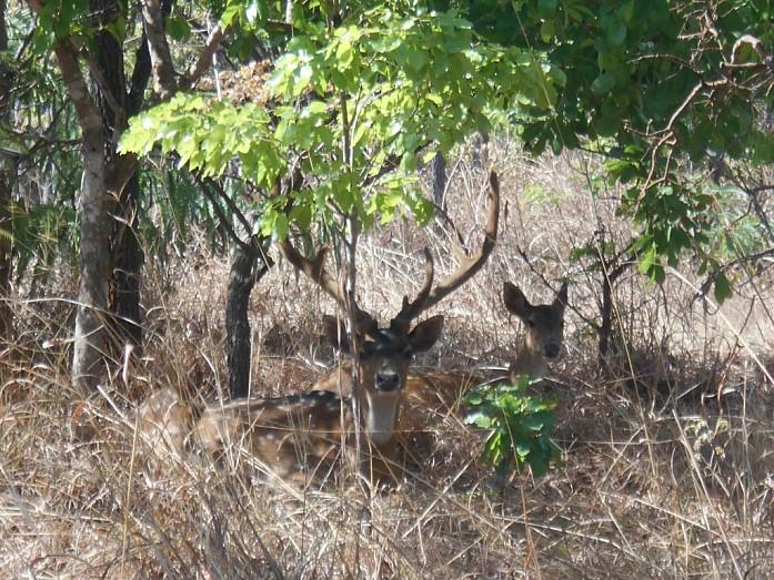 Lusaka National Park был открыт относительно недавно, в 2015 году. Он расположен недалеко от столицы, но из недостатков можно назвать то, что туда завезли еще немного животных