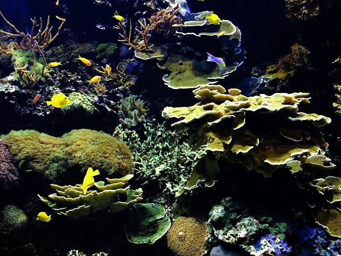 <em>Один из аквариумов Океанографика</em>