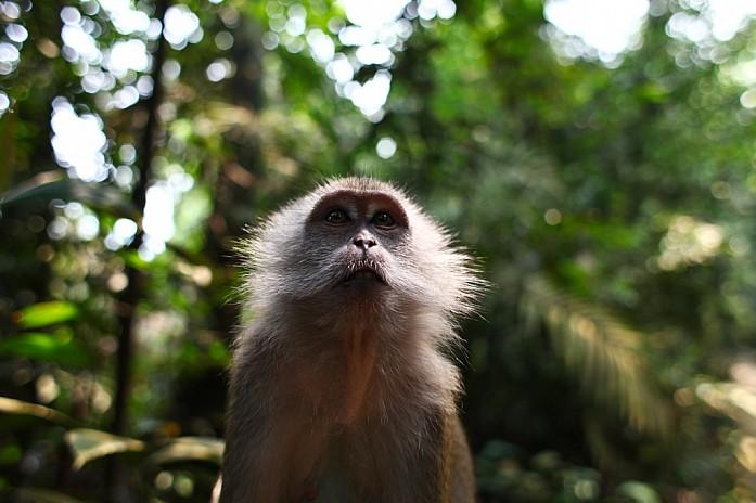 В парке очень много обезьян
