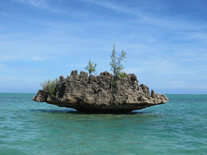 Кусочек коралла