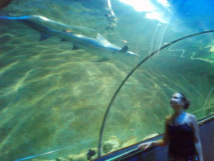 Акулы внутри