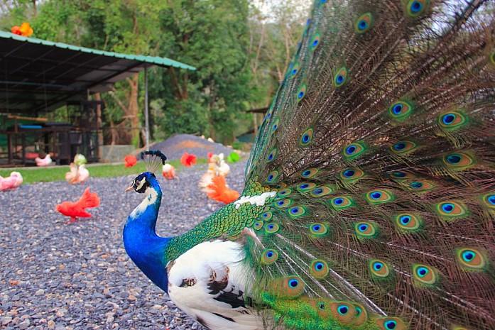 Парадайз парк на острове Самуи