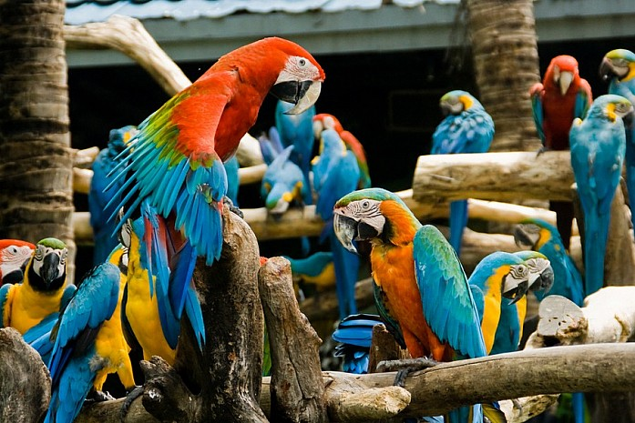 Safari World в Бангкоке