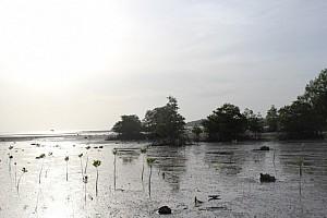 Панган - 2 недели в кокосовом раю