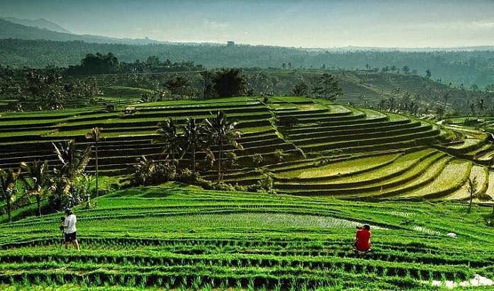 Рисовые террасы Джатилуви - фото из интернета для сравнения, мы до них не доехали