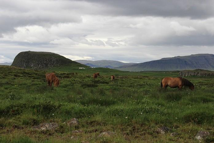 Лошади за незаметным забором