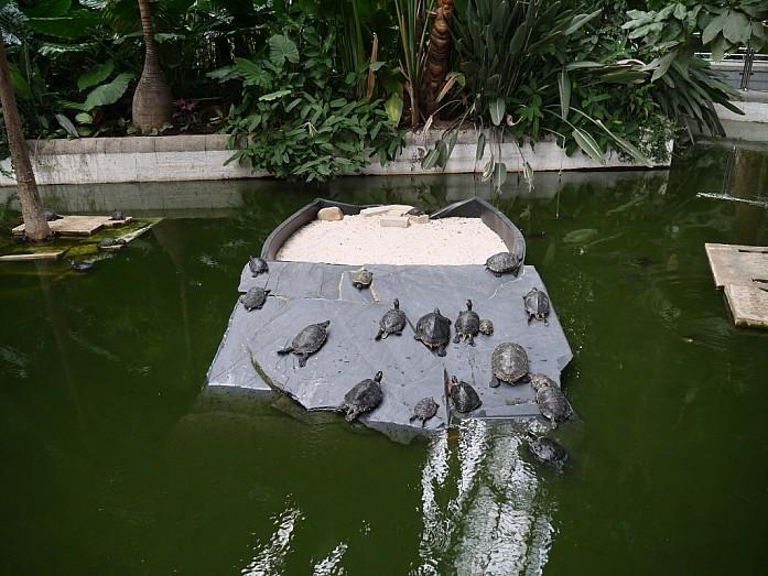 живые черепашки на вокзале Аточа