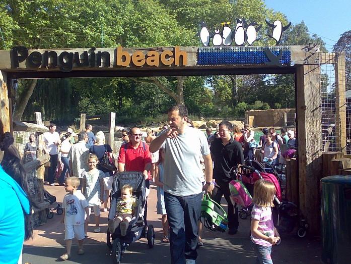 В зоопарке Лондона в дни моего приезда, был открыт новый пингвиний пляж.