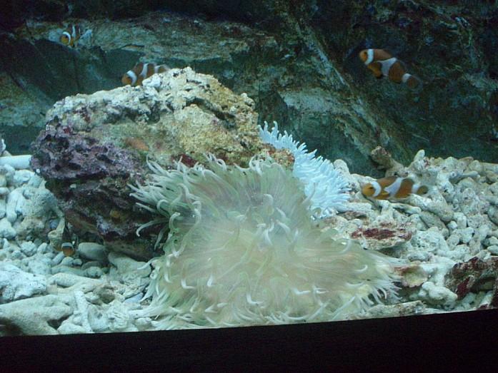 океанариум - медуза