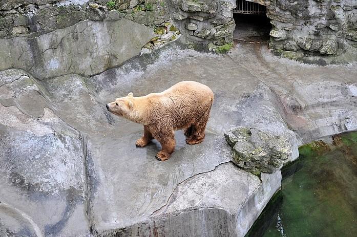 Бурый медведь, у него, кстати, полно места