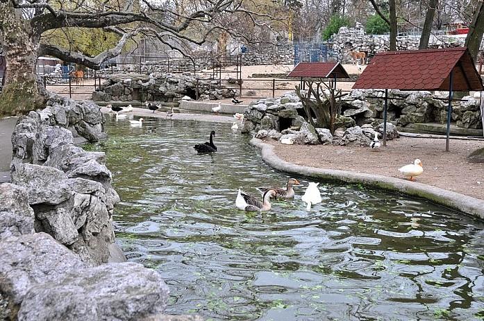 Маленький искусственный пруд с водопадом и птицами