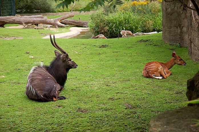 Всякие антилопы