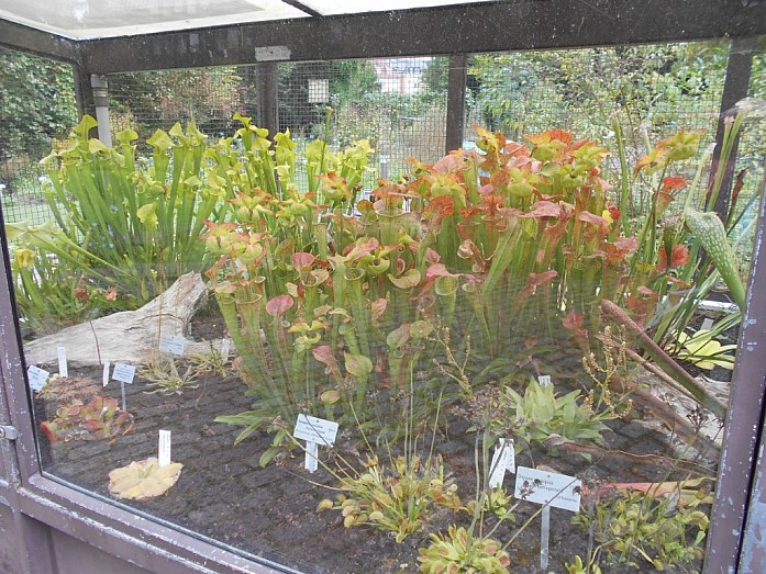 Витрина с растениями-хищниками