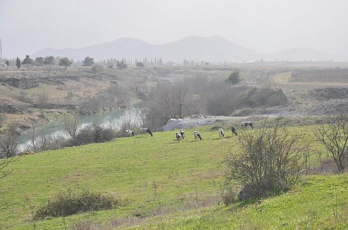Часто попадаются бескрайние поля, где выращивают виноград или пасут стада. Это место около Ниагары по дороге в Подгорицу