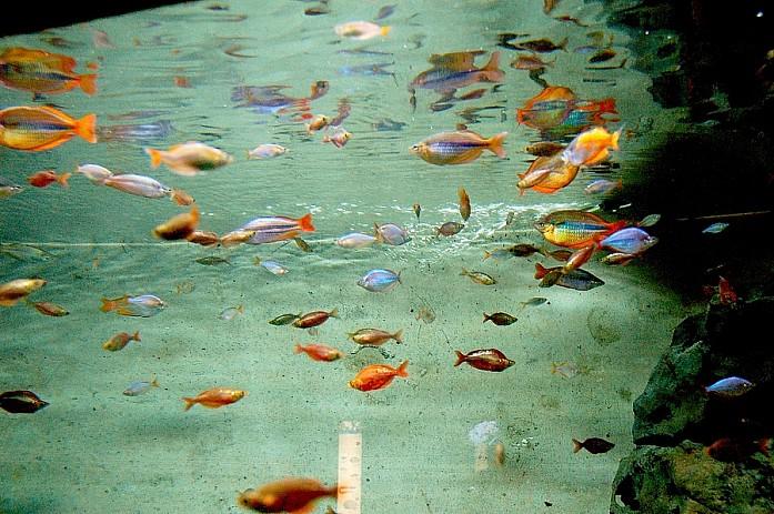 Огромная аквагалерея