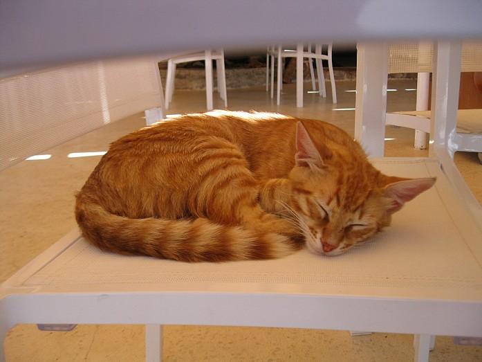 Черногорский кот