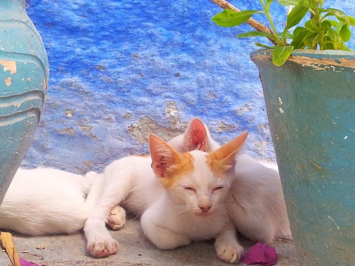 Даже кошки здесь самые расслабленные и безмятежные.