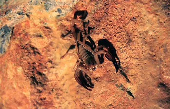 Сама пещера встретила нас сюрпризом. Милый скорпиончик, которого я сфотографировала и предпочла поскорее убраться оттуда)
