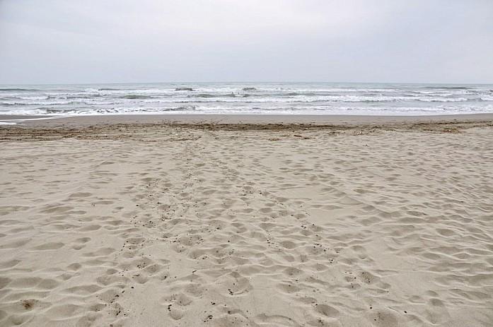 Velika Plaža - самый большой песчаный пляж Черногории