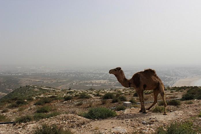 Туристический верблюд