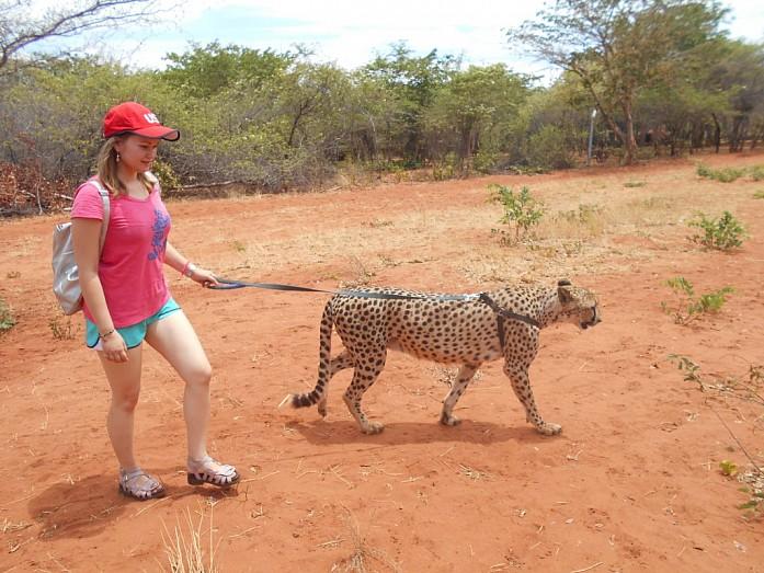 Прогулка с гепардом
