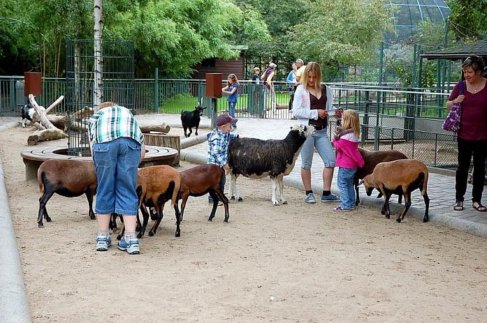 Контактный зоопарк будет очень интересен детям