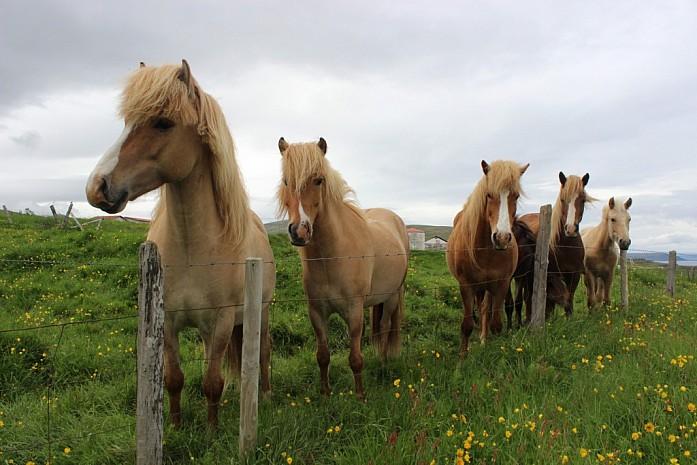 Очередные лошадки