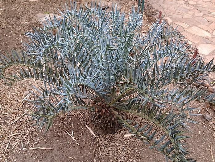 Реликтовое растение
