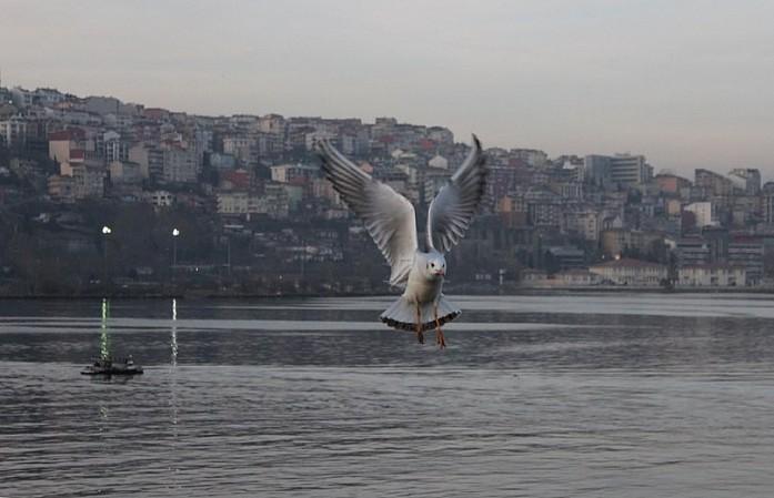 Символ Стамбула